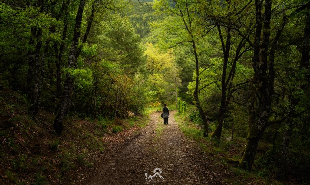 Bosques del Pirineo
