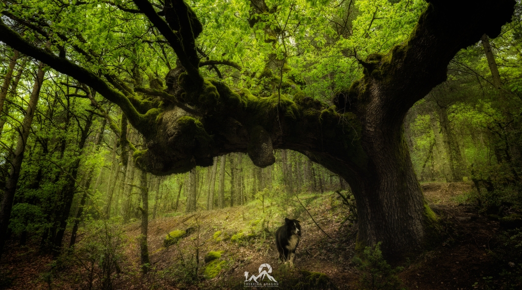 Viajes Fotográficos Pirineo