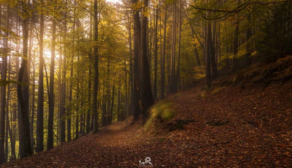 Canfranc en otoño